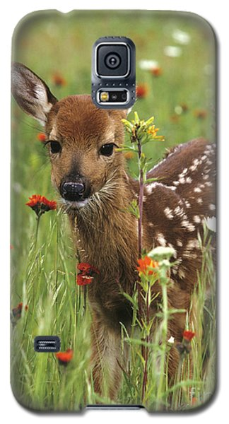 Galaxy S5 Case featuring the photograph Curious Fawn by Chris Scroggins