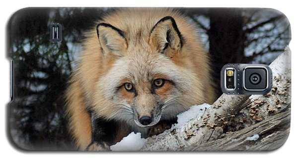 Curious Fox Galaxy S5 Case