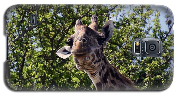 Curious Giraffe Galaxy S5 Case by AnneKarin Glass