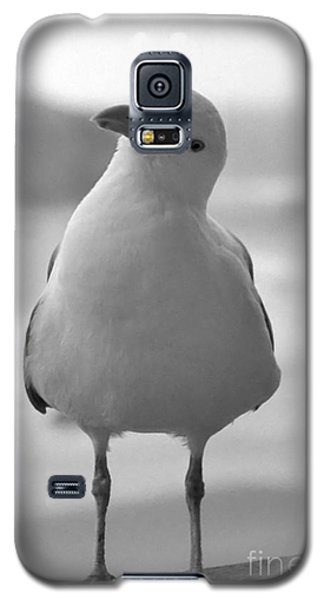Galaxy S5 Case featuring the photograph Curious Gull by Chris Scroggins