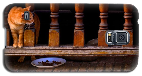 Curious Kitty Galaxy S5 Case by Ricardo J Ruiz de Porras