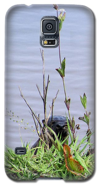 Galaxy S5 Case featuring the photograph Curious Otter by I'ina Van Lawick
