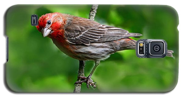 Galaxy S5 Case featuring the photograph Curious Purple Finch by Rodney Campbell