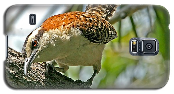 Galaxy S5 Case featuring the photograph Curious Rufous-naped Wren by Peggy Collins