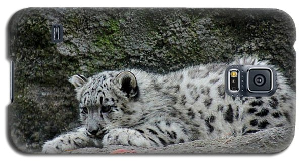Curious Snow Leopard Cub Galaxy S5 Case