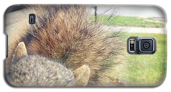 Funny Galaxy S5 Case - Curious Squirrel by Christy Beckwith