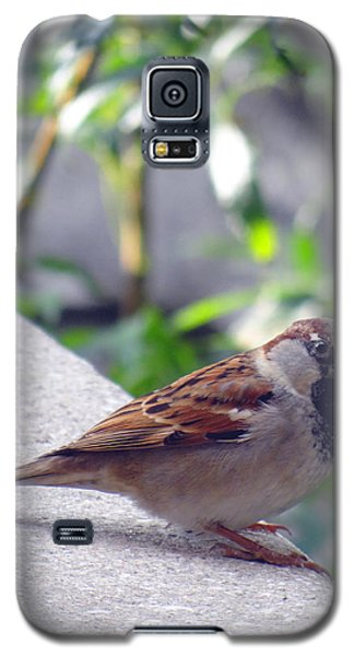 Galaxy S5 Case featuring the photograph Curious by Tom DiFrancesca