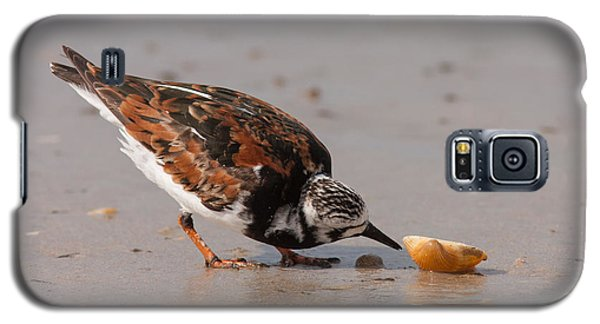 Curious Turnstone Galaxy S5 Case