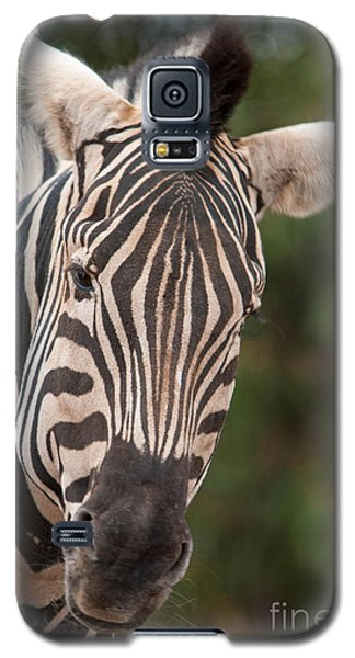 Curious Zebra Galaxy S5 Case