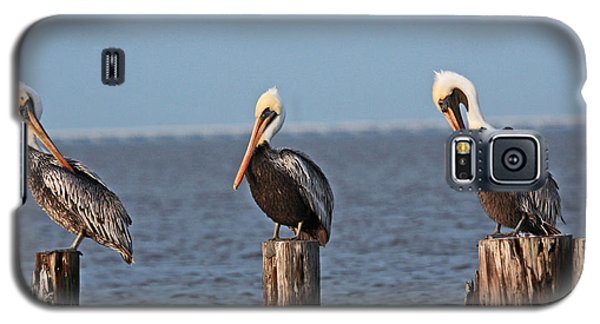 Curly Moe And Larry Pelicans Galaxy S5 Case by Luana K Perez