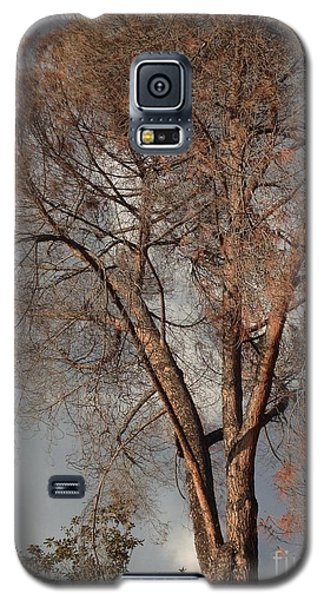 Galaxy S5 Case featuring the photograph Curtsy IIi by Nora Boghossian