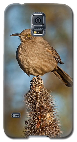 Curve-billed Thrasher On A Cactus Galaxy S5 Case by Jeff Goulden