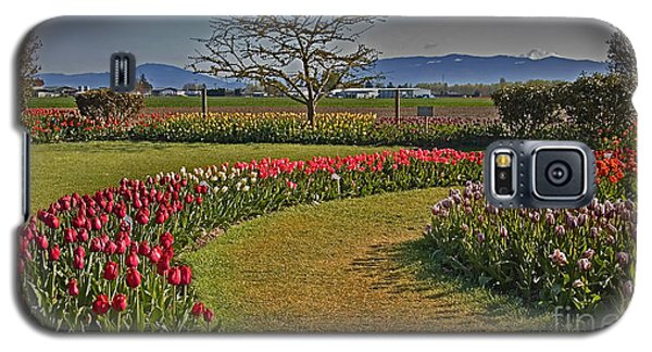 Curved Rows Of Tulip Landscape Galaxy S5 Case
