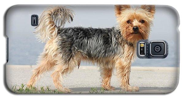 Cut Little Dog In The Sun Galaxy S5 Case