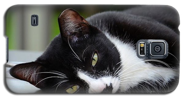 Cute Black And White Tuxedo Cat With Nipped Ear Rests  Galaxy S5 Case