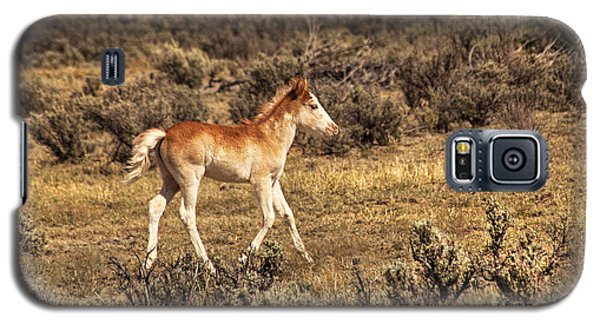 Cute Colt Wild Horse On Navajo Indian Reservation  Galaxy S5 Case