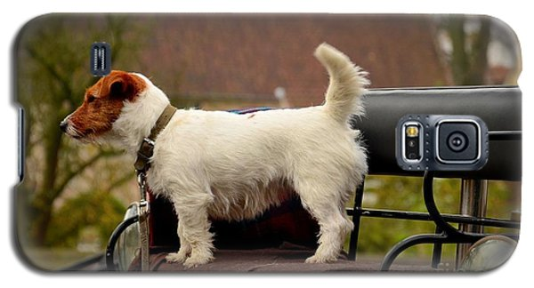 Cute Dog On Carriage Seat Bruges Belgium Galaxy S5 Case