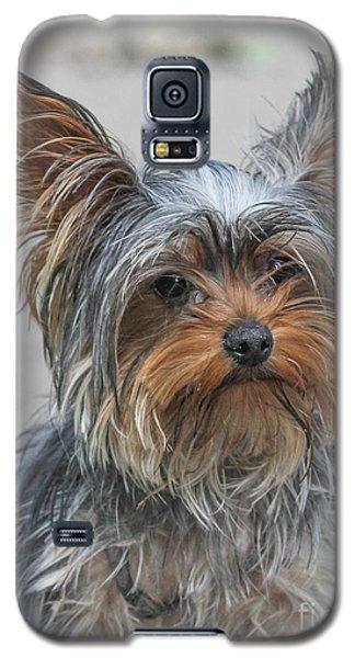 Cute Yorky Portrait Galaxy S5 Case by Jivko Nakev