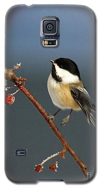 Cutest Of Cute Galaxy S5 Case