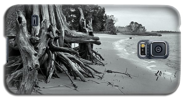 Cypress Bay Galaxy S5 Case by Deborah Smith