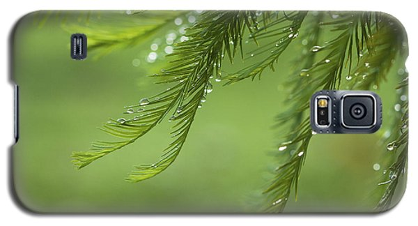 Galaxy S5 Case featuring the photograph Cypress In The Mist - Art Print by Jane Eleanor Nicholas