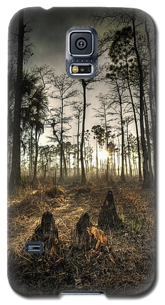 Cypress Stumps And Sunset Fire Galaxy S5 Case