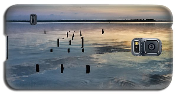 Cypress Stumps Galaxy S5 Case by Susi Stroud