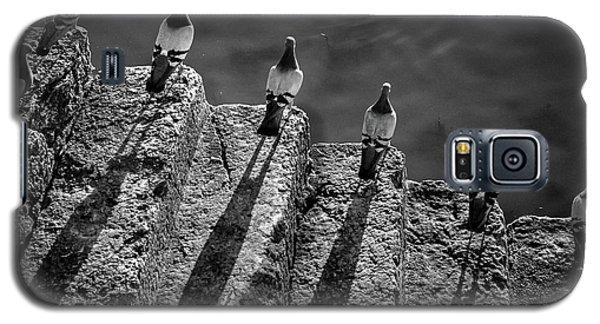 Dove Galaxy S5 Case - Da? A?? Ra? A?? Mi A?? Fa? A?? Sol A?? La? A?? Si by Fernando Jorge Gon?alves