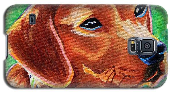 Dachshund Beagle Mixed Breed Dog Portrait Galaxy S5 Case