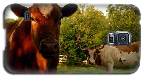 Dads Cows Galaxy S5 Case