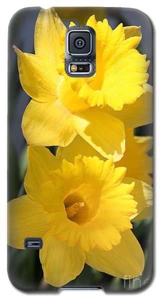 Galaxy S5 Case featuring the photograph Daffodil Delight by Anita Oakley