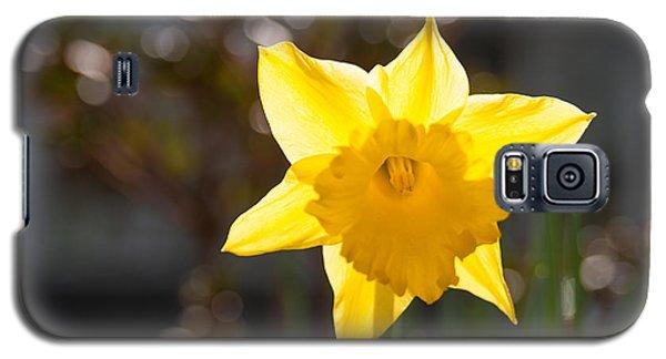 Daffodil Delight Galaxy S5 Case