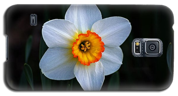 Galaxy S5 Case featuring the photograph Daffodil In Riverside Park by Bill Swartwout