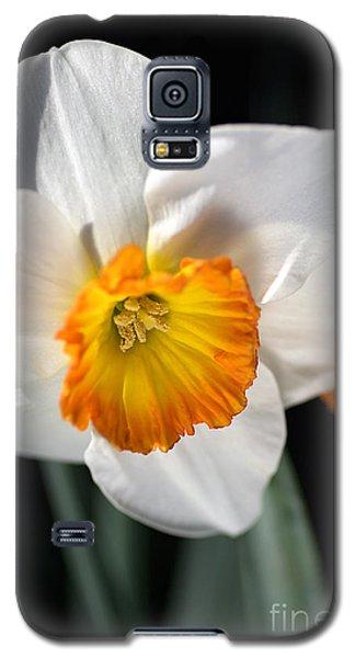 Daffodil In White Galaxy S5 Case