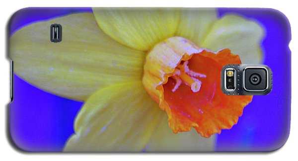Galaxy S5 Case featuring the photograph Daffodil On Blue by Juls Adams