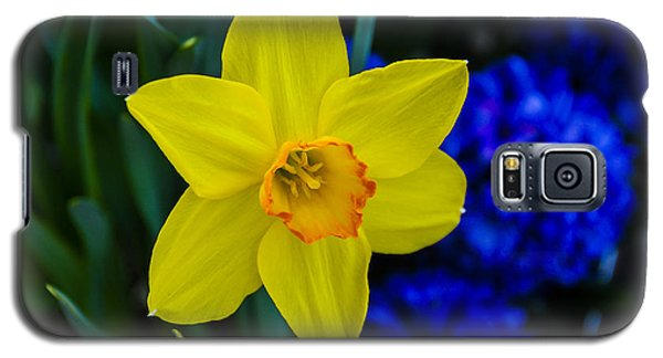 Galaxy S5 Case featuring the photograph Daffodil by Phil Abrams