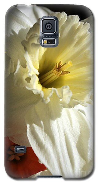 Daffodil Still Life Galaxy S5 Case