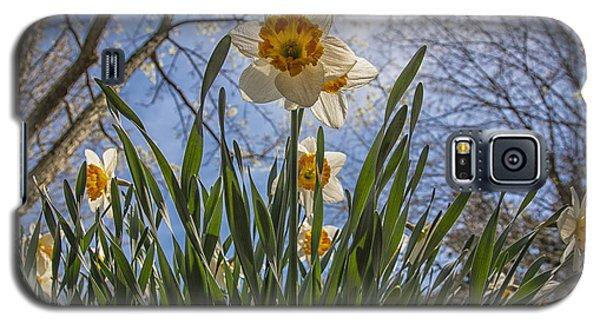 Daffodil Sun Galaxy S5 Case