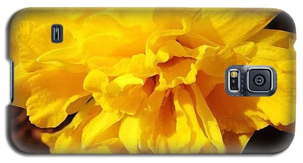 Daffodils Are Blooming Galaxy S5 Case by Christy Beckwith