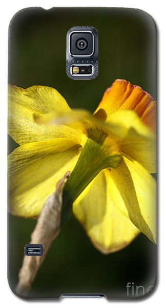 Galaxy S5 Case featuring the photograph Daffodils Grace by Joy Watson
