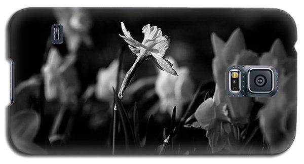 Daffodils In Black And White Galaxy S5 Case