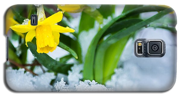 Daffodils In The Snow  Galaxy S5 Case