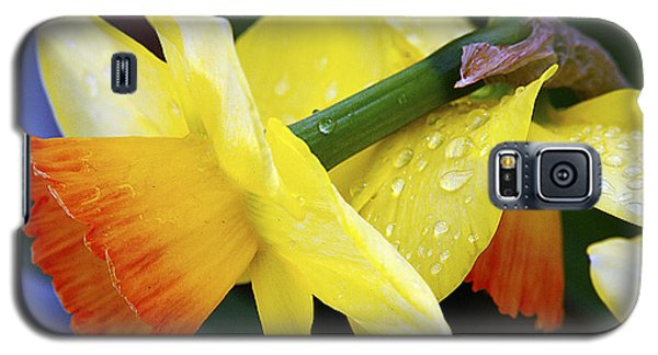 Galaxy S5 Case featuring the photograph Daffodils With Rain by Joe Schofield