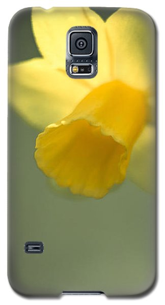 Daffy-down-dilly  Galaxy S5 Case