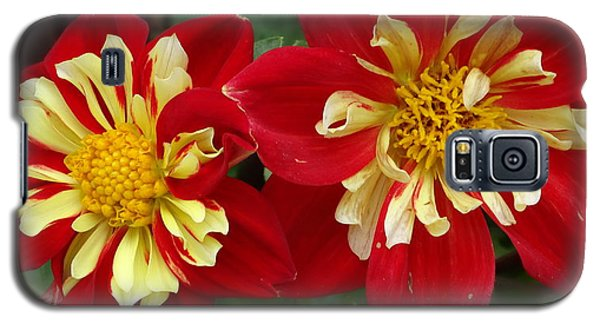 Galaxy S5 Case featuring the photograph Dahlia by Alan Lakin