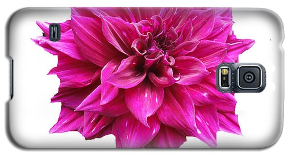 Dahlia Blossom On White Galaxy S5 Case