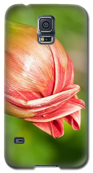 Galaxy S5 Case featuring the photograph Dahlia Bud by Sue Smith