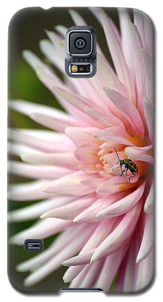 Dahlia Bug Galaxy S5 Case by Chris Anderson