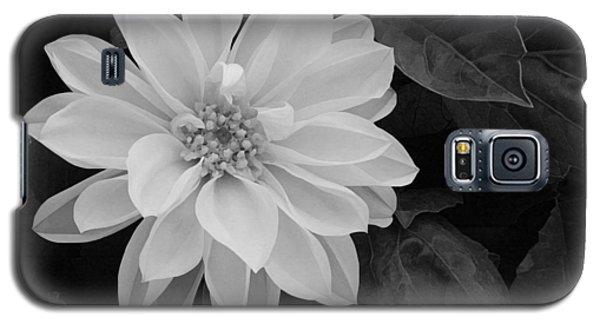 Dahlia Galaxy S5 Case by Ellen Henneke