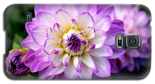Dahlia Flower With Purple Tips Galaxy S5 Case